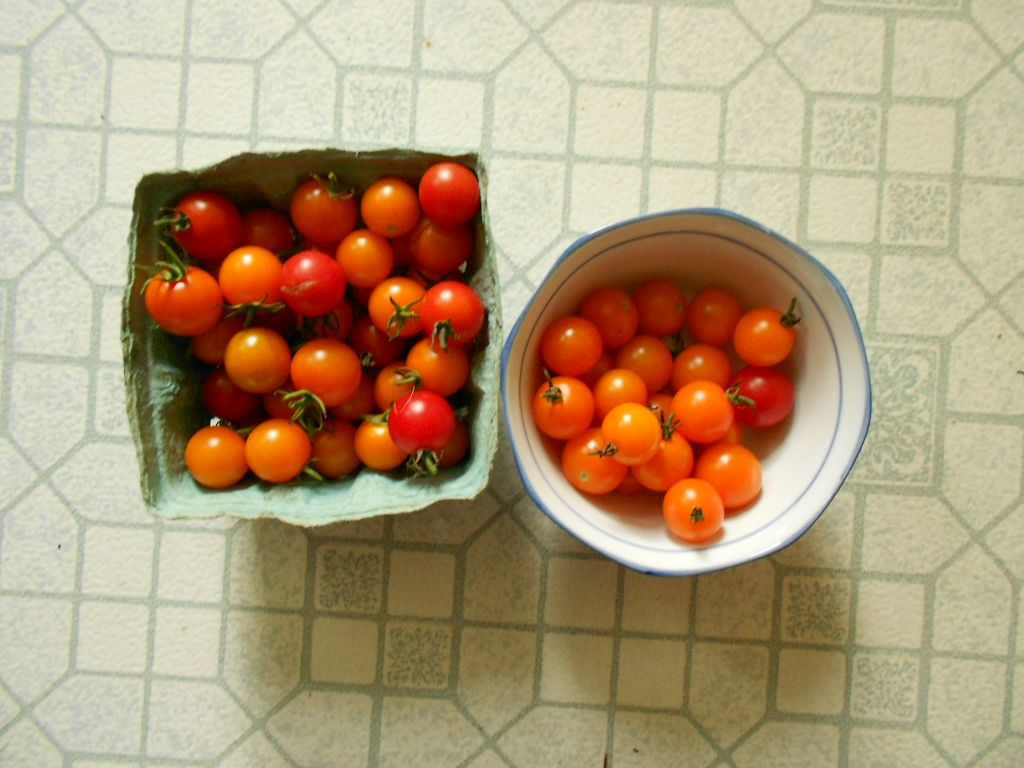 Cherry Tomatoes, red and gold
